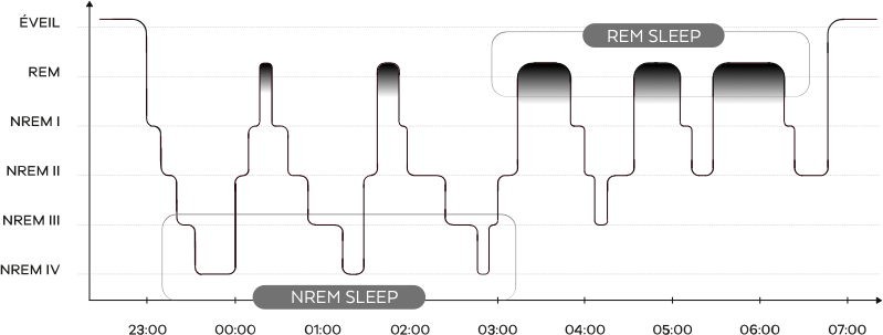 sleep_stages_en.png